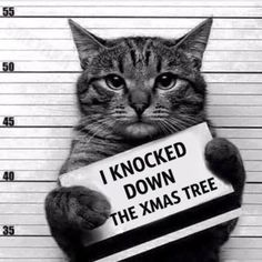 We should have called the police on our cat long time ago.. Such a convicted felon for ram sacking the Xmas tree