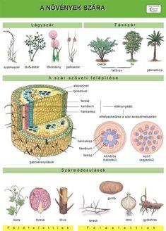 A házimacska - Taneszköz.hu Cactus Plants, Elementary Schools, Lily, Science, Teaching, Education, Biology, Cacti, Primary School