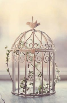Bird cages♥
