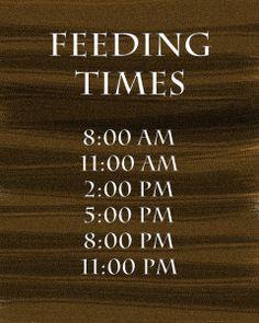 Feeding Time at The Zoo {Take Shape for Life Week 1} (Sponsored) #TSFL |