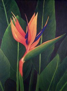 Snowbird Art & Snowbird Press - Bird of Paradise II Tropical Art, Tropical Garden, Tropical Plants, Exotic Flowers, Tropical Flowers, Beautiful Flowers, Exotic Birds, Colorful Birds, Deco Floral