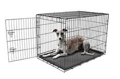 Carlson Secure and Compact Single Door Metal Dog Crate, Large * To view further for this article, visit the image link.