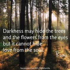 Darkness may hide the trees and the flowers from the eyes but it cannot hide the love from the soul. Rumi
