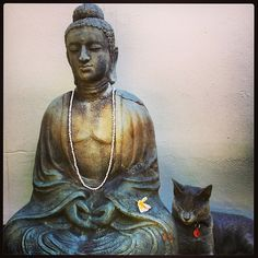 """Everybody in the world is seeking happiness—and there is one sure way to find it. That is by controlling your thoughts. Happiness doesn't depend on outward conditions. It depends on inner conditions."" ~ Dale Carnegie * The Buddha cat <3 lis"
