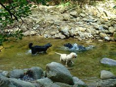 Dog walks: enniskerry - woodland walk | A dog's paw Dog Paws, Dog Walking, Walks, Woodland, Your Dog, Dogs, Pet Dogs, Doggies, Walking The Dogs