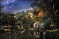 Alone in the woods Photo by Gabor Dvornik — National Geographic Your Shot