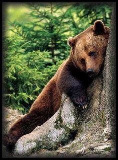 """I'm giving a 'Bear Hug' to this beautiful tree!"""