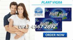 JUAL PIL OBAT KUAT SEX TAHAN LAMA: OBAT KUAT PLANT VIGRA Facial, Personal Care, The Originals, News, Plants, Facial Care, Personal Hygiene, Face Care, Planters