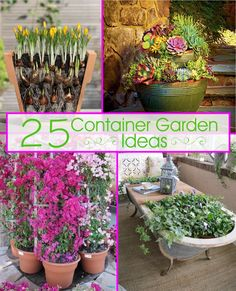 25 Container Garden Ideas - perfect for patios and small yards!