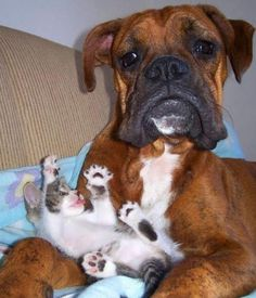 He's still getting used to not being the only child anymore... - Imgur
