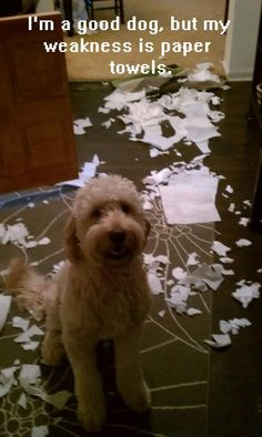 I'm a good dog, but my weakness is paper towels.