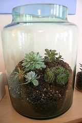 How to make terrarriums.  How awesome? Very awesome.
