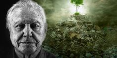 By Jess Murray Truth Theory Famed naturalist and nature television presenter Sir David Attenborough has publicly announced what many conversationists have been thinking for a … David Attenborough Planet Earth, Truth Theory, Obstetrics And Gynaecology, Environmental Issues, Natural World, Climate Change, Filmmaking, Documentaries, Leonardo Dicaprio
