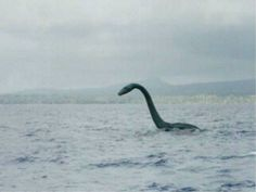 Ogopogo is a lake monster that resides in Lake Okanagan in British Columbia. Documented sightings go back as far as 1872 of a creature described to be 20-50 feet long with a horse-shaped head and serpentine body.