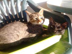 Gatinho 14 - aka gatinhos sem complexos