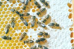 Pesticidi, Greenpeace: «Bene lo stop UE all'insetticida Thiacloprid Summertime Sadness, Bee Wax, Bees, Faith, Bavaria, Siblings, Freedom
