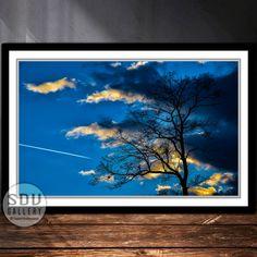 Downloadbares Bild, Digital Foto, druckbare Wandkunst, Silhouette, Wald, Himmel, Wolke, Toter Baum, Blattlos, Sonnenlicht, Wien, Österreich