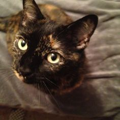 Tortie cats are the best! (I have one too.)