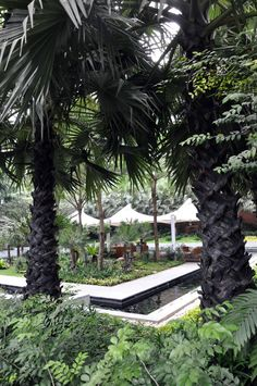 Lovely outdoor spaces. A paradise at the middle of it all. (Pullman Bangkok King Power Hotel, Bangkok, Thailand) (photo taken by CDSNadal)