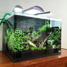 Update #natureaquarium #plantedtank #aquascape #iwagumi by loefgreenjustesen