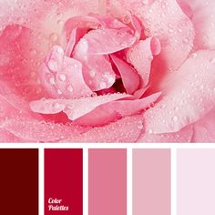 Rose with dews, delicate rose colors, beige, beige and pink, burgundy-pink, colors of spring, dark pink, dirty white, lilac, pink and dusty pink, pink-brown color, purple, rosewood color, shades of pink.