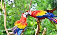 Beautiful Birds Wallpaper - Best Hd Wallpaper site