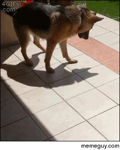 He is playing with his shadow