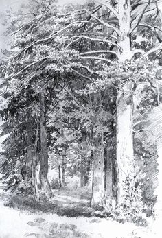 Pine forest, 1889 Ivan Shishkin