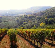 Vineyards in autumn, overlooked by Naousa Town on the horizon.