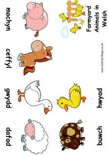Farm animal booklet for kids, Welsh language