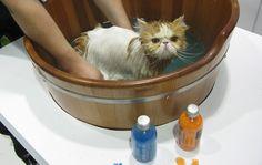 Feira pet tem ofurô para gatos e castelo para hamsters; veja imagens - fotos em Negócios - g1