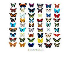 Image result for butterfly photos