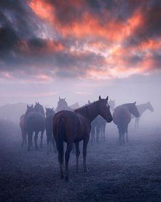Wild Horses~~Erciyes Mountain,Kayseri ,Turkey // Photography by cumacevikphoto