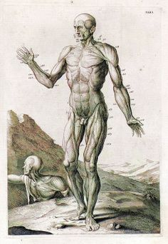 Anatomy Illustrations 1700s
