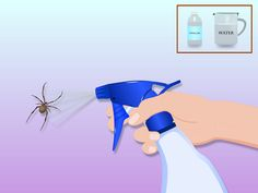 How to Get Rid of Spiders in the House -- via wikiHow.com