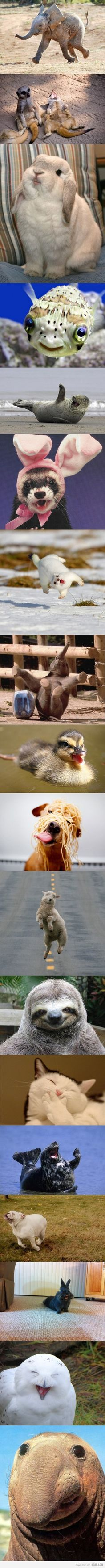 World's happiest animals! Please treasure all animals lives.
