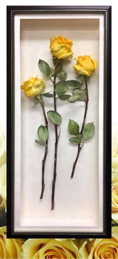 How to preserve roses from a funeral whether it s just a few flowers or a whole arrangement fantastic blooms can professionally freeze dry your flowers in a variety of ways to suite your style there are endless possibilities learn Perserving Flowers, Freeze Dried Flowers, Box Frame Art, Frozen Rose, Drying Roses, Flower Aesthetic, Aesthetic Style, Memorial Flowers, Preserved Roses