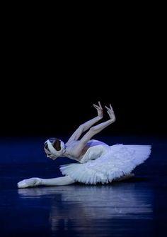 """loverussianballet: """" Svetlana Zakharova as The Swan Attribution+Non-commercial Jack Devant """" Ballet Art, Ballet Dancers, Ballerinas, Dance Photos, Dance Pictures, Swan Lake Ballet, Svetlana Zakharova, Russian Ballet, Bolshoi Ballet"""