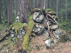 #enchantedforest http://bit.ly/eibsee-9 #bavaria #eibsee #hiking #wanderlust #forest