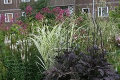 Cimicifuga 'Brunette' with variegated Miscanthus, Veronicastrum virginicum, Eupatorium, and Sanguisorba tenuifolia 'Alba'; from Ljono Stauder (www.ljono.no)