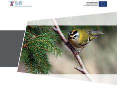 [Bird Ringing] Obraczkowanie Ptakow