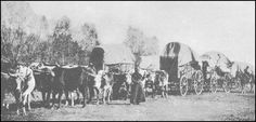 Gold rush wagon train 1849