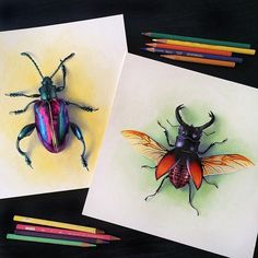 Sketching some beetles #coloredpencil