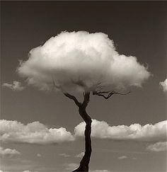 Image result for black and white photography split frame feeding river