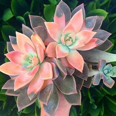 Succulents - Bomb photo by and succs 💚 succulove it! - The Effective Pictures We Offer You About cactus costume A quality picture can tell you many thing - Succulent Gardening, Planting Succulents, Garden Plants, Container Gardening, House Plants, Planting Flowers, Succulent Plants, Succulents Drawing, Indoor Succulents