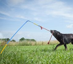 Tether Tug: A Self Tugging Dog Toy That Sticks Into The Ground