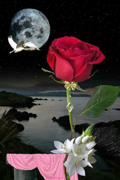 Beautiful Moon Images, Love You Images, Beautiful Roses, Rose Images, Flower Images, Moon Pictures, Nature Pictures, Moon Setting, Garden Waterfall