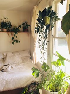 White Walls and Houseplants