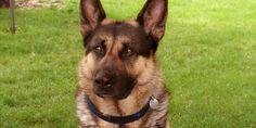 http://huddled.com.pl/czego-warto-nauczyc-psa/ czego warto nauczyć psa?