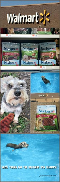 Training for the Backyard Olympics #ad  @NudgesDogTreats #NudgeThemBack @poshonabudget http://poshonabudget.com/2016/07/training-for-the-backyard-olympics-ad-nudgesdogtreats-nudgethemback.html